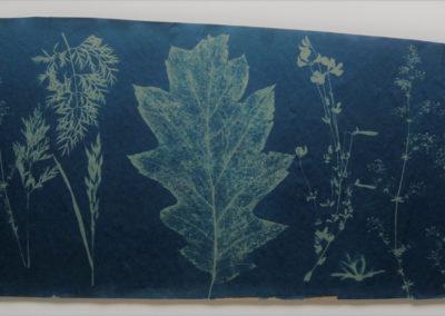 herbarium <Br> achter museumglas